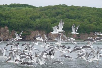 Seagulls everywhere!!!