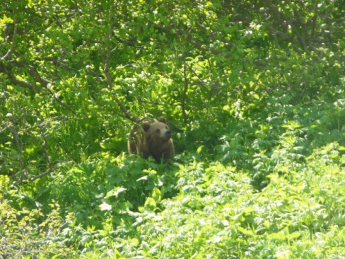 BROWN BEAR!!!