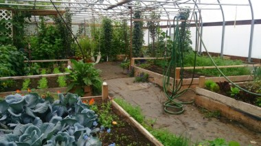 My working place - the greenhouse