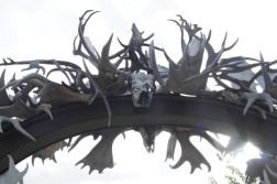 005_Antlers everywhere