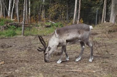 026_Baby Reindeer