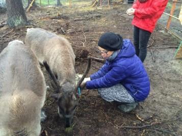 054_New baby reindeer