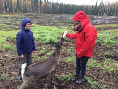 055_New baby reindeer