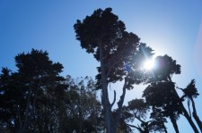 Sunshine in California