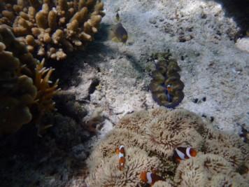 UnderwaterWorldPH02