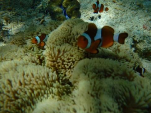 UnderwaterWorldPH03