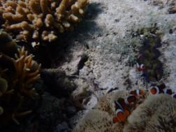 UnderwaterWorldPH05