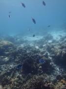 UnderwaterWorldPH10