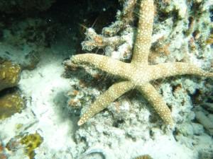 UnderwaterWorldPH11