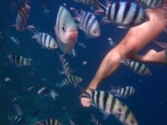 UnderwaterWorldPH14