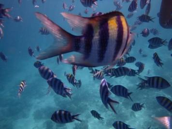 UnderwaterWorldPH15