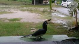 PulauPangkorMY02