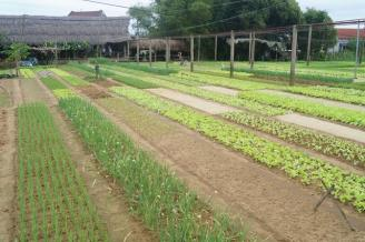 Vegetable field...
